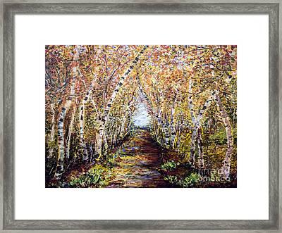 Birch Tree Allee Framed Print