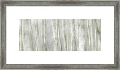 Birch Tree Impression No 1 Framed Print by Andy-Kim Moeller