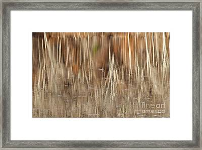 Birch Tree Reflections Framed Print by Alan L Graham