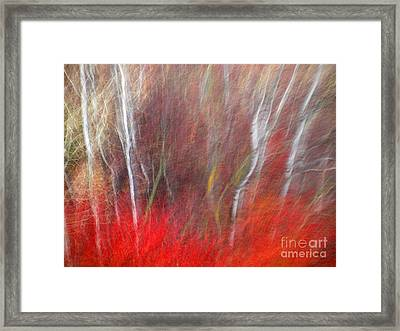 Birch Trees Abstract Framed Print