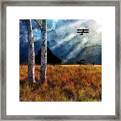 Birch Trees And Biplanes  Framed Print