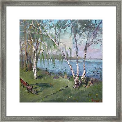 Birch Trees By The River Framed Print by Ylli Haruni