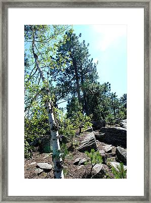 Framed Print featuring the photograph Birch Trees by Dany Lison