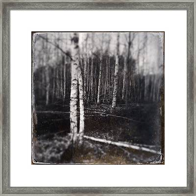 Birch Trees In Enchanted Forest Framed Print