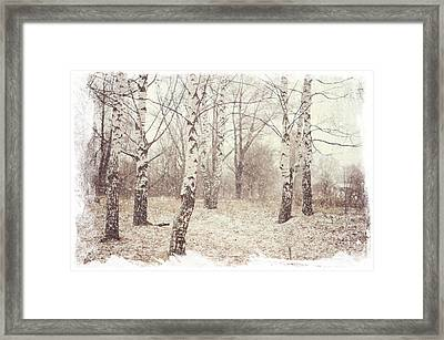 Birch Trees In The Snow. Winter Poems Framed Print by Jenny Rainbow