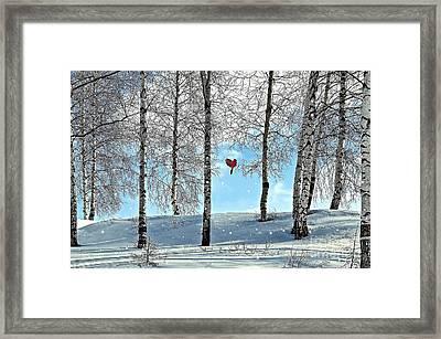 Birch Trees Framed Print by Liane Wright