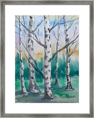Birch Trees Framed Print by Melinda Saminski