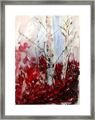 Birch Trees - Red Fall Foliage Framed Print