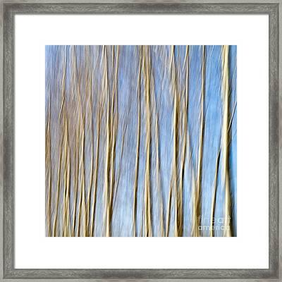 Birch Trees Framed Print by Stelios Kleanthous