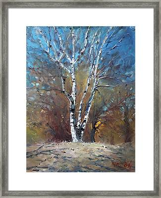 Birch Trees Framed Print by Ylli Haruni
