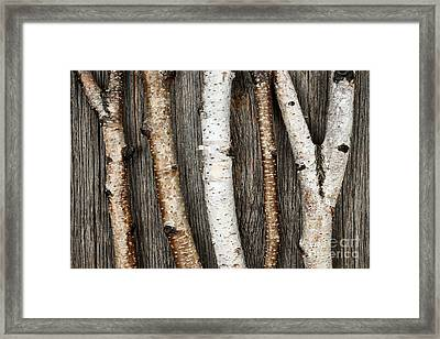 Birch Trunks Framed Print by Elena Elisseeva
