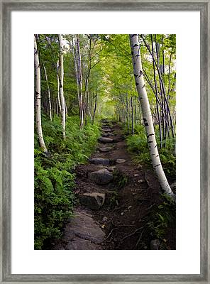 Birch Woods Hike Framed Print