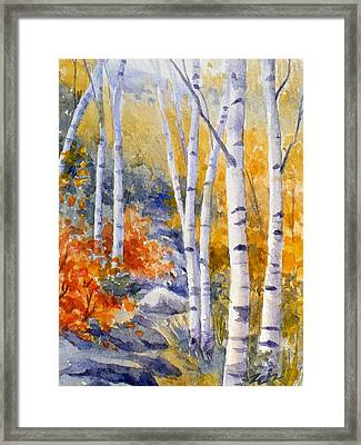 Birches Along The Trail Framed Print by Janet  Zeh