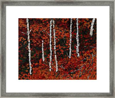 Birches Framed Print by David Dossett