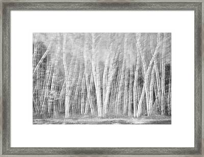 Birches Framed Print by David Pratt
