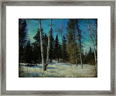 Birches  Framed Print by Dianne  Lacourciere