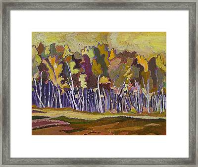 Birches In Autumn Framed Print by Janet Ashworth