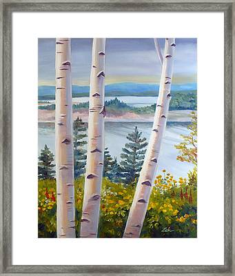 Birches In Nova Scotia Framed Print by Janet  Zeh