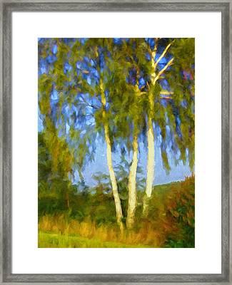 Birches In Sunlight Framed Print