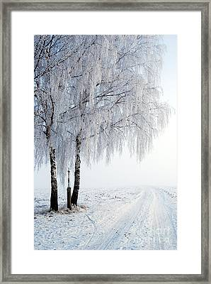 Birches With Wayside Cross Framed Print