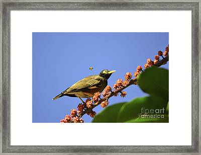 Bird And Bee Framed Print