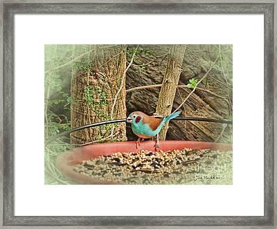 Bird And Feeder Framed Print by Joan  Minchak