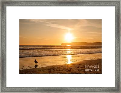Bird And His Sunset Framed Print