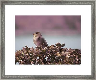 Bird And Jade Framed Print