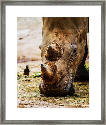 Bird And Rhino Framed Print
