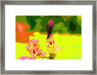 Bird And Rhodie Framed Print