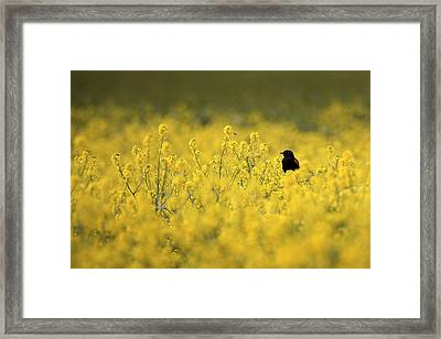 Bird And The Bees Mg_9150 Framed Print by David Orias