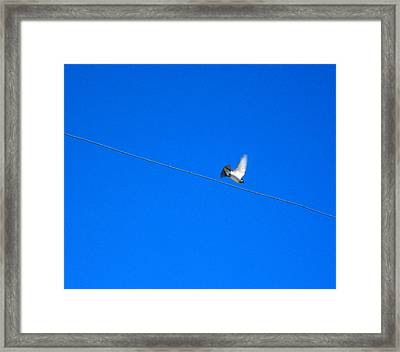 Bird And Wire Framed Print