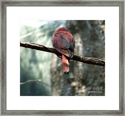 Bird Framed Print by Andrea Anderegg