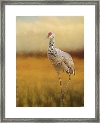 Bird Art - A Quiet Walk Framed Print by Jordan Blackstone