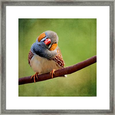 Bird Art - Change Your Opinions Framed Print