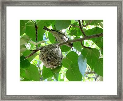 Bird At Home Framed Print