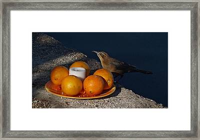 Bird Banquet Framed Print by Jennifer Nelson