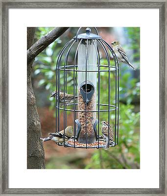 Bird Breakfast Framed Print