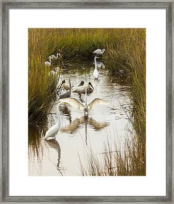 Bird Brunch 2 Framed Print