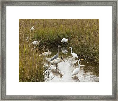 Bird Brunch Framed Print by Patricia Schaefer