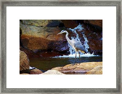Bird By A Waterfall  Framed Print by Sarah Mullin