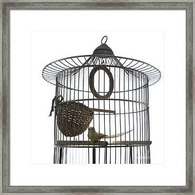 Bird Cage Framed Print by Bernard Jaubert