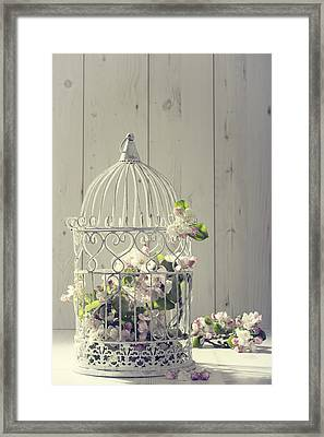 Bird Cage Framed Print by Amanda Elwell