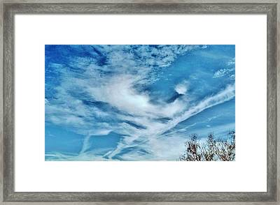 Bird Cloud Soaring By Framed Print