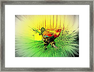 Come And Enjoy The Bird Dance For The Rooster  Framed Print