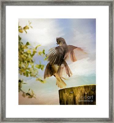 Bird Dance Framed Print