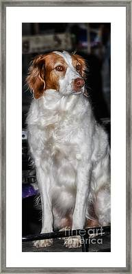 Bird Dog Beauty Framed Print