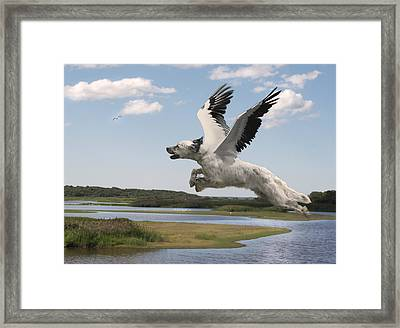 Bird Dog Framed Print