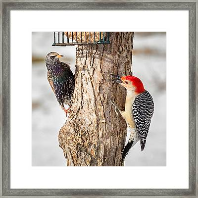 Bird Feeder Stand Off Square Framed Print by Bill Wakeley
