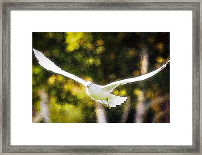Bird Fly With Colors Framed Print by Saibal Ghosh